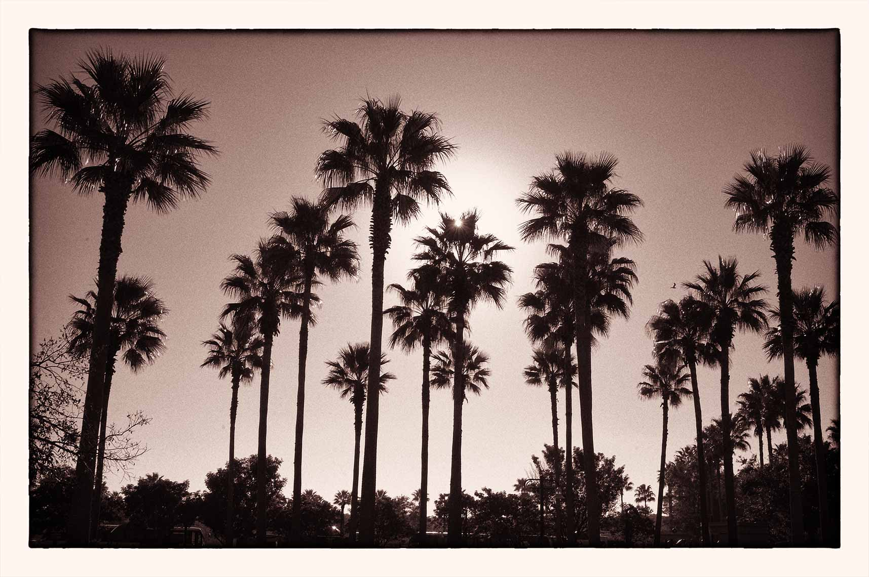 Florida Palm Trees at Disney by David Fox Photographer